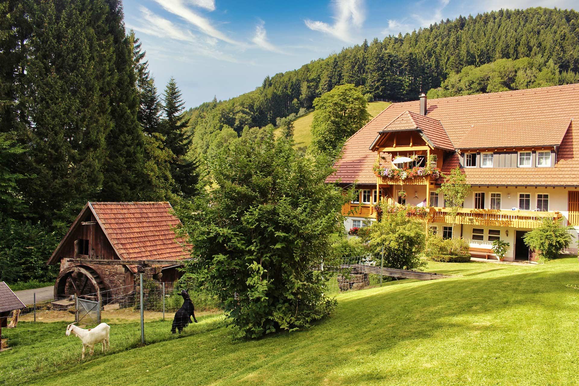 Ferienhof im Schwarzwald